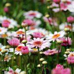 Een mooi en goed onderhouden tuin