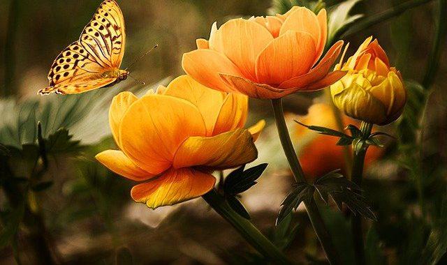tuin natuur