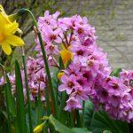 Tuin laten aanleggen door een hovenier